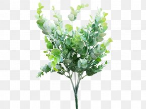 Eucalyptus - Cut Flowers Shrub Gum Trees Branch PNG