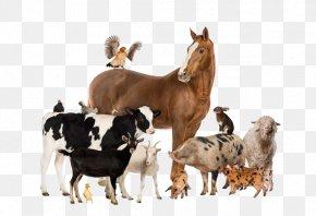 Horse - Cattle Horse Goat Pig Livestock PNG