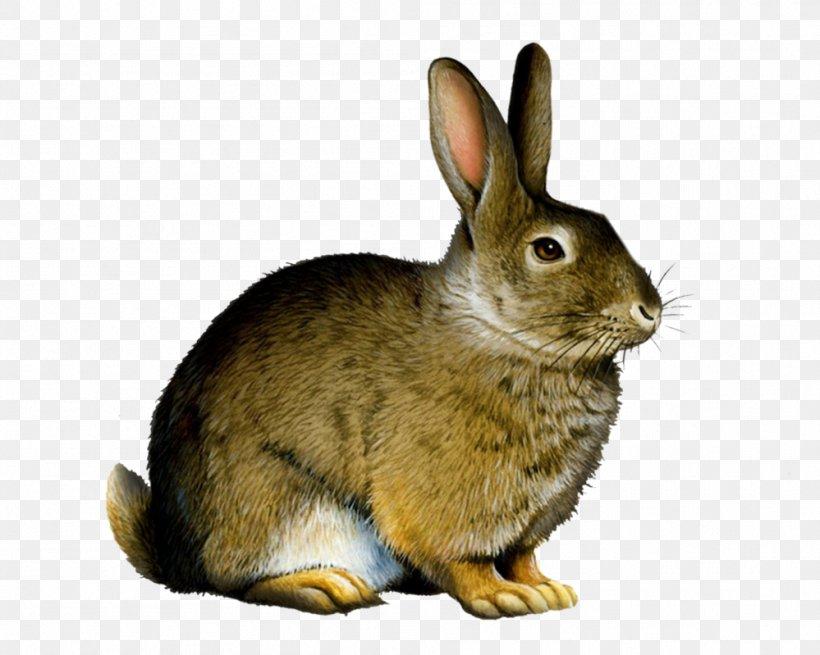 Rabbit Clip Art, PNG, 999x799px, Rabbit, Cottontail Rabbit, Document, Domestic Rabbit, Fauna Download Free