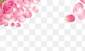 Rose - Rose Pink Stock.xchng Wallpaper PNG