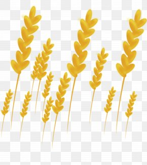 Gold Wheat - Gold PNG
