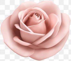 Rose Soft Peach Transparent Clip Art Image - Garden Roses Pink Clip Art PNG