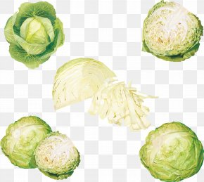 Cabbage Cabbage - Leaf Vegetable Cabbage PNG