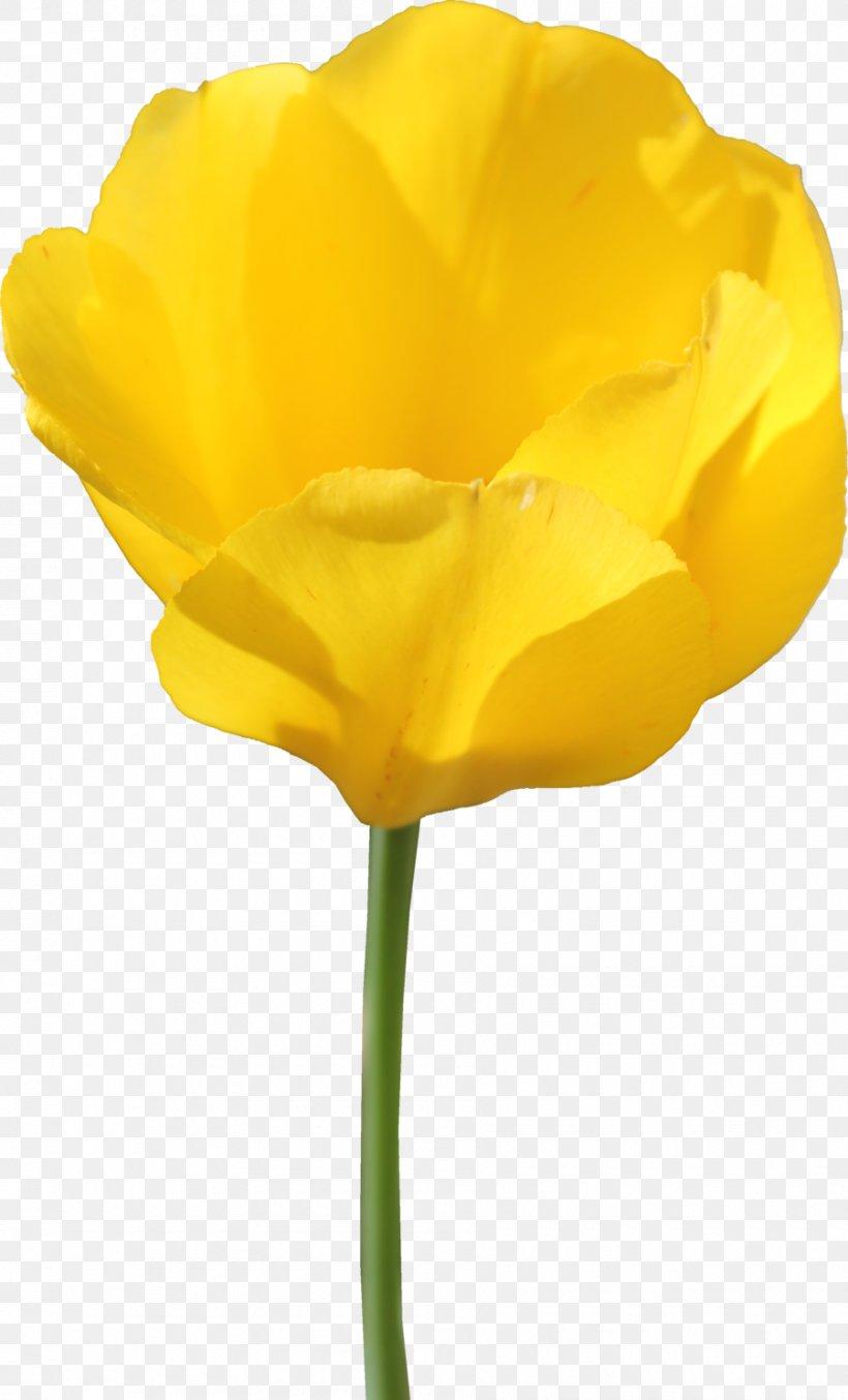 Tulip Flower, PNG, 900x1487px, Tulip, Cut Flowers, Flower, Flowering Plant, Petal Download Free
