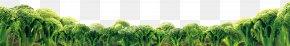 Cauliflower,cauliflower - Wheatgrass Food Vegetable Broccoli PNG