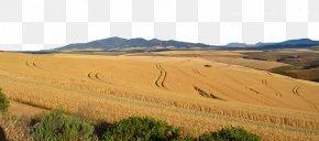 Gold To Wheat Field - Ecoregion Soil Grassland Sand Land Lot PNG
