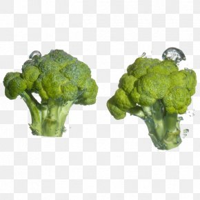 Free Stock Photos Broccoli Pull - Broccoli Cauliflower Cabbage Food Vegetable PNG