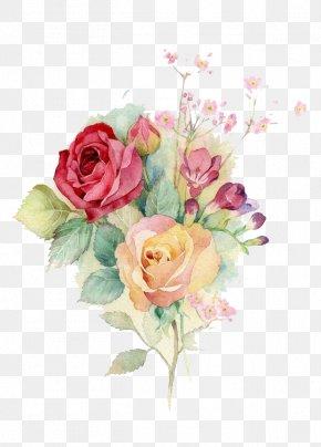 Watercolor Flowers - Centifolia Roses Garden Roses Floral Design Flower Bouquet Cut Flowers PNG
