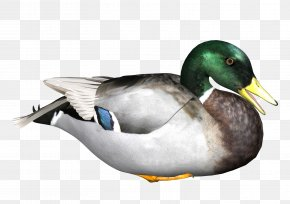 Duck - Duck Hunt Donald Duck Donna Duck PNG