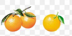 Orange B - Orange Tangerine Citrus Xd7 Sinensis Frutti Di Bosco Fruit PNG