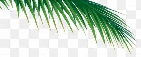 Leaf - Palm Branch Arecaceae Palm-leaf Manuscript Frond PNG