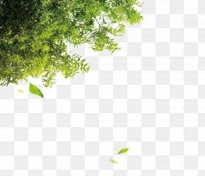 Trees - Tree Leaf Computer File PNG