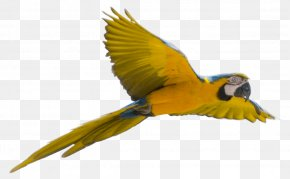 Yellow Flying Parrot Images Download - Parrot Bird Clip Art PNG