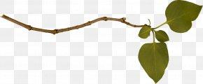 Branch Image - Hyperlink Computer File PNG