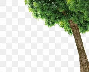 Trees - Graduation Ceremony Template Poster PNG