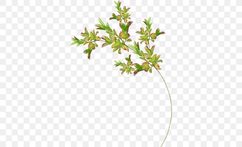 Twig Leaf Plant Stem Tree Cheeses, PNG, 500x500px, Twig, Aquifoliaceae, Aquifoliales, Branch, Cheeses Download Free