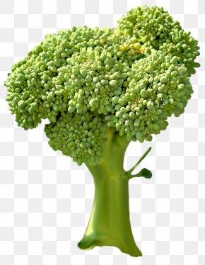 Broccoli Vegetables - Broccoli Vegetable PNG
