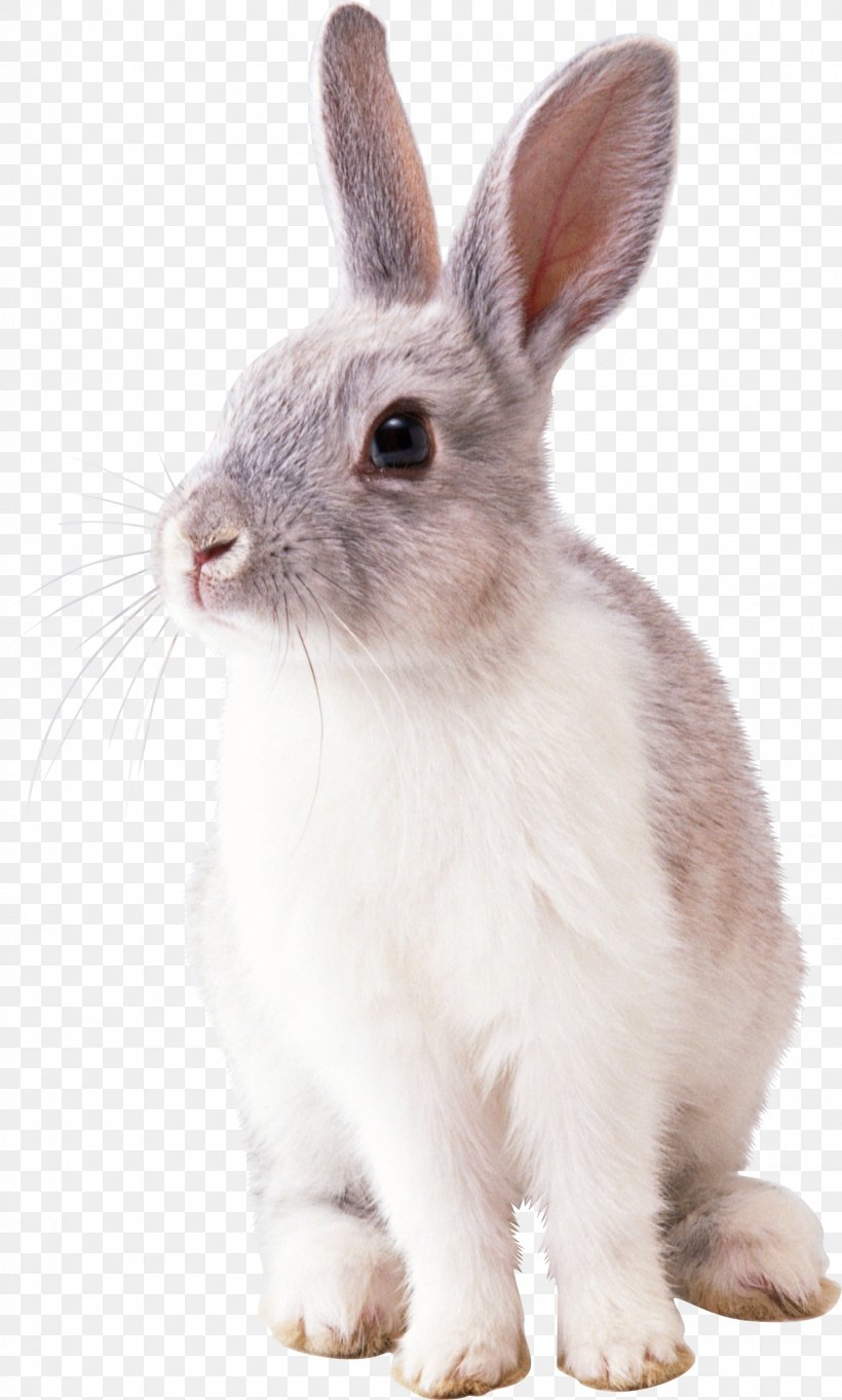 Rabbit Clip Art, PNG, 1529x2542px, Easter Bunny, Domestic Rabbit, Fauna, Hare, Licence Cc0 Download Free