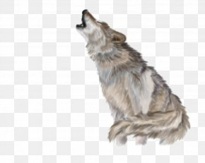 Wolf - Gray Wolf Clip Art PNG