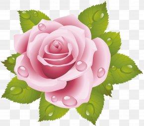 Rose - Rose Cross-stitch Pink Floral Design Flower PNG