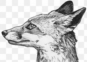 Fox Eyes Clipart - Red Fox Silver Fox Drawing Sketch PNG