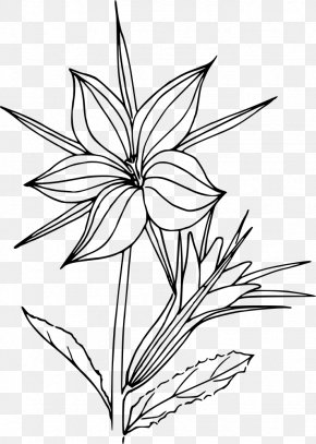 Flower - Black And White Flower Line Art Botany Drawing PNG