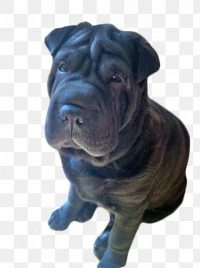 Shar Pei - Shar Pei Ori-Pei Dog Breed Non-sporting Group Breed Group (dog) PNG