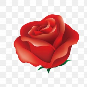 Red Flowers - Rose Red Pink Illustration PNG