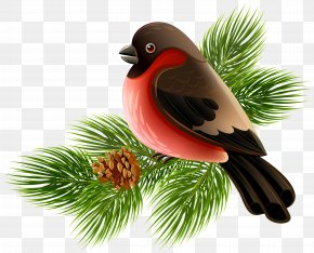 Bird And Pine Branch Clipart Image - Bird Clip Art PNG