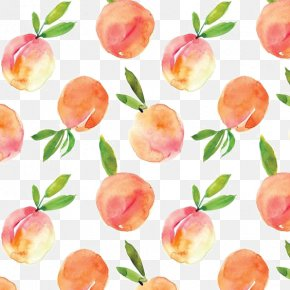 Peaches Shading - Peach Watercolor Painting Drawing PNG