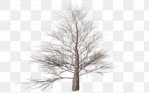Tree Transparent - Tree Branch Autumn Clip Art PNG