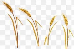 Wheat - Kasha Caryopsis Oat Wheat PNG