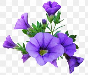 Flower - Petunia Image Flower Graphics Desktop Wallpaper PNG