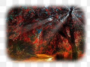 Forest - Forest Tree Sunlight Autumn PNG