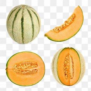 Melon Photography - Cantaloupe Honeydew Melon Frutti Di Bosco Stock Photography PNG
