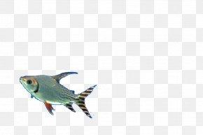 Fish - Fish Designer Pattern PNG