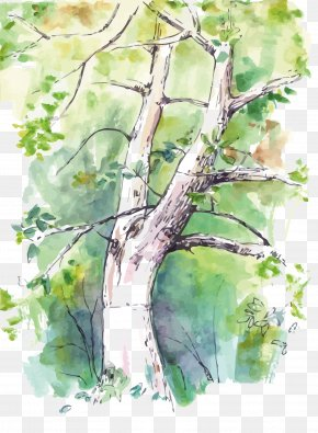 Vector Watercolor Trees - Watercolor Painting Birch Twig Tree PNG