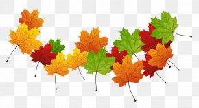 Fall Transparent Leaves - Autumn Leaf Color Autumn Leaf Color PNG