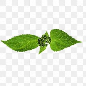 Leaf - Leaf Branch Trunk Google Images PNG