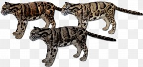 Clouded Leopard - Bengal Cat California Spangled Wildcat Leopard Zoo Tycoon 2 PNG
