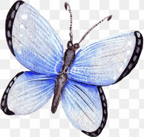 Watercolor Butterfly - Butterfly Insect Wing Moth PNG