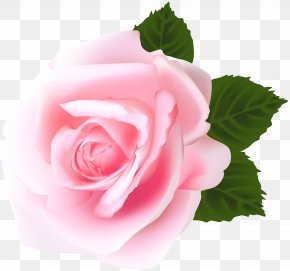 Rose Pink Clip Art - Garden Roses Centifolia Roses Pink Clip Art PNG