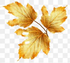 Autumn Leaves - Autumn Flower Clip Art PNG
