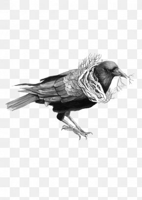 Crow - Common Raven Bird Drawing Illustration PNG