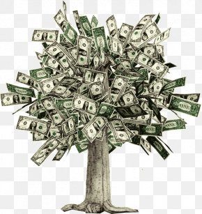 Money Tree - Moneytree Guiana Chestnut Money Trees Bank Account PNG