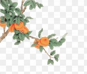 Painting Persimmon Tree - Chinese Painting Ink Wash Painting Japanese Persimmon Bird-and-flower Painting PNG