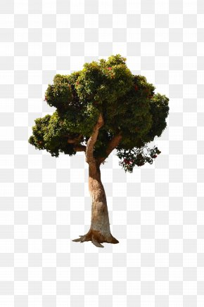 Tree Top View - Stock Photography Tree PNG