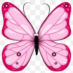 Butterfly Clip Art - Drawing Clip Art PNG