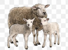 Goat - Suffolk Sheep Goat Merino Stock Photography Cattle PNG
