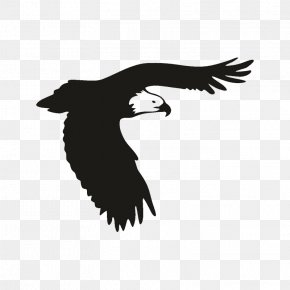 Bird - Bald Eagle Bird Of Prey Window PNG